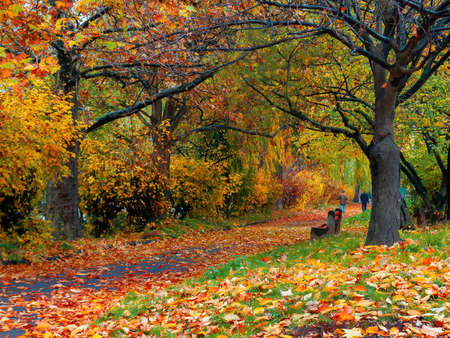 sunny autumn scenery in the park. trees in colorful foliage. ground covered with fallen leaves. seasonal change of nature