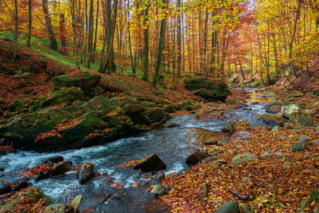 mountain stream in autumn forest. water flow among the rocks. trees in colorful foliage. sunny weather in the morning. beautiful nature scenery