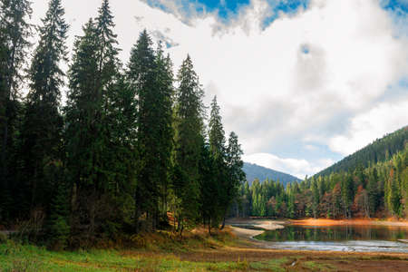 mountain lake among the coniferous forest. wonderful nature scenery in autumn. dry sunny weather with clouds on the sky Stock Photo