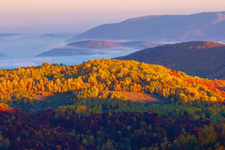 misty sunrise in mountains. wonderful autumn weather. beautiful nature scenery observed from the top of a hill. trees in colorful fall foliage. fog glowing in the distant valley 免版税图像