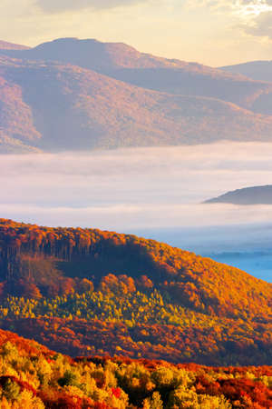 thick fog over the rural hills in morning light. dramatic Carpathian countryside autumnal scenery 免版税图像