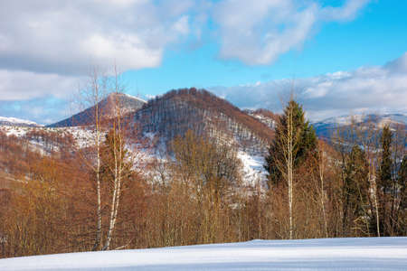 mountain landscape in wintertime. forest on snow covered hills. clouds on the vivid blue sky above the carpathian countryside scenery. wonderful sunny weather 免版税图像