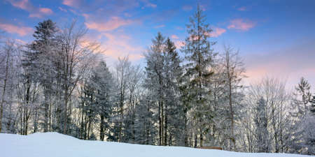 winter scenery at dawn. trees on snow covered meadow beneath a sky with clouds in colorful light 免版税图像