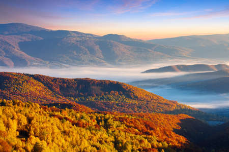cold morning fog with golden hot sunrise in the valley of Carpathian mountain range. green grass and trees with colorful foliage on the hillside meadow lit by first rays of sun 免版税图像