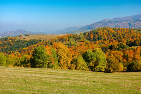 trees in colorful foliage on the hills. rolling countryside scenery in autumnal season. wonderful sunny weather on a sunny day in carpathian mountain landscape 免版税图像
