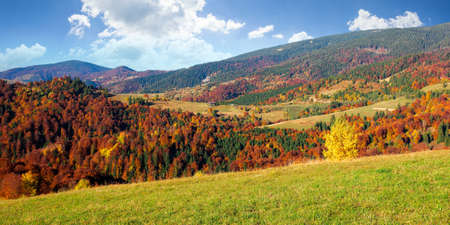 countryside scenery in fall season. trees on grassy mountain hills in fall colors. beautiful sunny weather with fluffy clouds on the sky 免版税图像