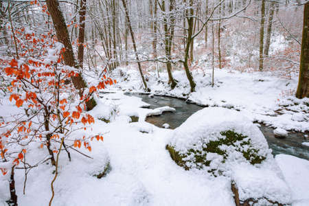 mountain river runs through winter forest. beautiful scenery with trees in hoarfrost and riverbanks covered in snow. few leaves in fall color on the twigs. 免版税图像