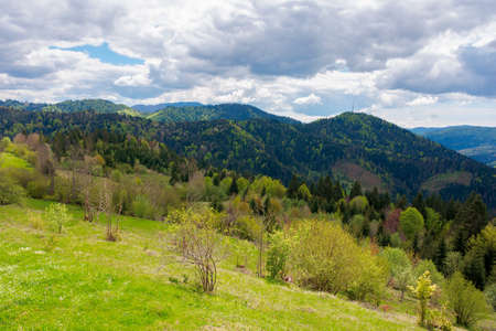 mountain countryside in springtime. trees on grassy rolling hills. valley in the distance ofthe scenery. cloudy sky