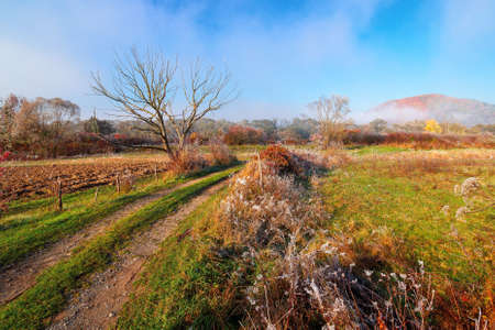 rural landscape on a foggy sunrise. beautiful countryside scenery in autumn season. trees in fall foliage by the road. bright sunny morning Stock Photo