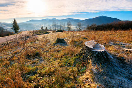 deforestation in the mountains. fresh cut trees along the pass. stump of in hoarfrost. cold autumn morning countryside scenery Archivio Fotografico