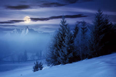 spruce forest on a snow covered hill at night. beautiful mountain landscape in winter in full moon light. misty weather with bright sky Stock Photo