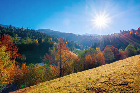 autumnal rural landscape in mountains. grass on the hill, trees in colorful foliage. beautiful nature scenery. sunny morning weather with fluffy clouds on the sky