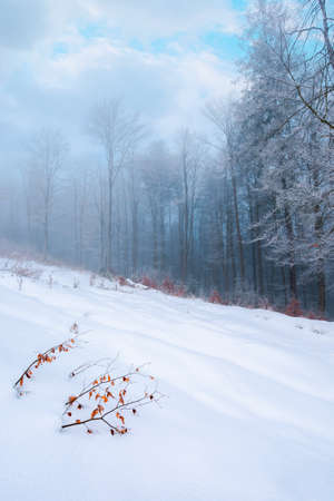 forest on a snow covered slope. trees in hoarfrost. mysterious foggy weather in the morning. beautiful winter scenery