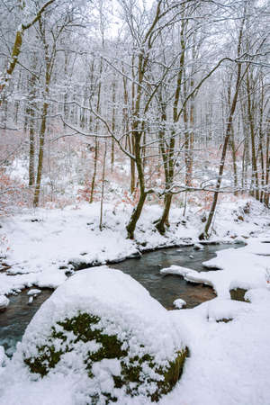 mountain river runs through winter forest. beautiful scenery with trees in hoarfrost and riverbanks covered in snow. few leaves in fall color on the twigs. Stock Photo