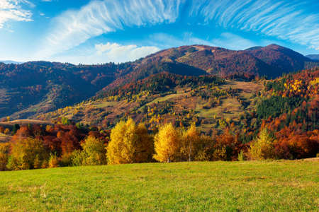 countryside scenery in fall season. trees on grassy mountain hills in fall colors. beautiful sunny weather with fluffy clouds on the sky Stock Photo