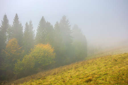 cold foggy morning. moody weather scenery. spruce forest on the grassy meadow in autumn. nature magic concept
