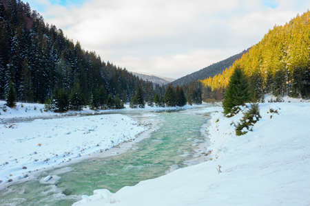 mountain river in wintertime. sunny carpathian landscape with spruce forest and snow covered shore. synevyr national park, ukraine