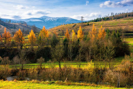sunny afternoon in mountainous countryside. trees in autumn foliage. snow capped peak in the distance. beautiful rural area of carpathians