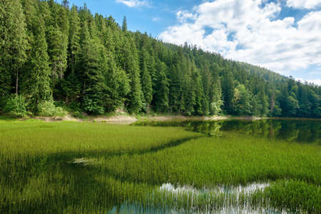 high altitude mountain lake among the forest. spruce trees on the shore. beautiful nature scenery on a sunny day. Stock Photo