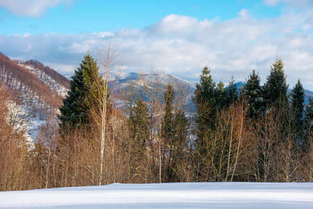 mountain landscape in wintertime. forest on snow covered hills. clouds on the vivid blue sky above the carpathian countryside scenery. wonderful sunny weather Stock Photo
