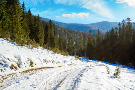 carpathian countryside on a sunny winter day. beautiful mountainous rural landscape. road through snow covered meadow among spruce forest on the hill Stock Photo