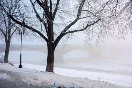 trees on the snow covered embankment. winter cityscape. longest linden alley in europe, uzhgorod, ukraine. bridge in the hazy distance