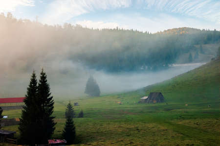 trees in the valley of mountainous natural park. foggy dawn in autumn season. beautiful rolling landscape beneath a glowing sky