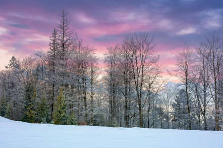 winter scenery at dawn. trees on snow covered meadow beneath a sky with clouds in colorful light Stock Photo