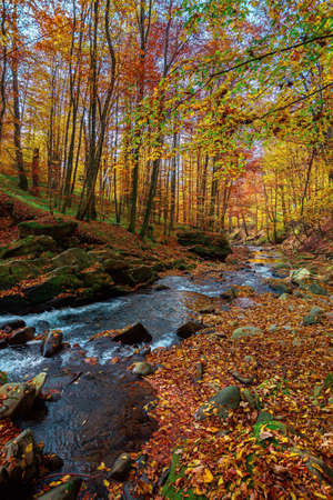 mountain river in the forest. water flow among the rocks. trees in autumn colors. sunny forenoon weather. beautiful nature background
