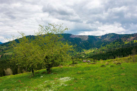 mountain rural landscape in spring. forest and orchard on the steep hills. scenery of abandoned Kuzsbej village. two houses in the distance. cloudy sky