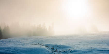blizzard in mountains. magic scenery with clouds and fog on a sunny winter morning. trees in mist on a snow covered meadow. cold weather