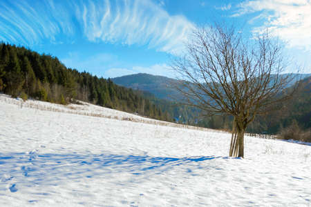 tree on the snow covered field in mountains. beautiful nature winter landscape on a sunny day. clouds on a bright blue sky