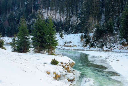 mountain river in winter. spruce forest on snow covered shore. cold sunny morning weather with clouds on the sky