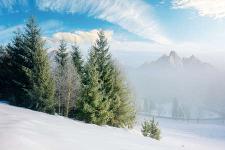 spruce forest on a snow covered hill. beautiful comosite mountain landscape in winter. misty weather with bright sky