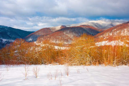 winter landscape in afternoon light. beautiful nature scenery in mountains. leafless trees on a snow covered slope. wonderful sunny weather with clouds on the sky