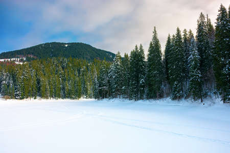 frozen mountain lake among spruce forest. beautiful winter landscape on a sunny day