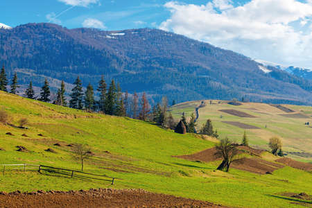 mountainous rural landscape in springtime. fields and trees on rolling hills in green grass. snow on the distant mountain. sunny weather with fluffy clouds on the sky. beautiful carpathian landscape