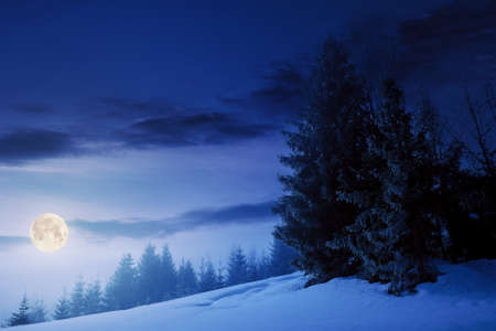 fog on a bright winter night. spruce trees among the glowing mist in full moon light. beautiful scenery in mountains. hills covered in snow. cold frosty weather