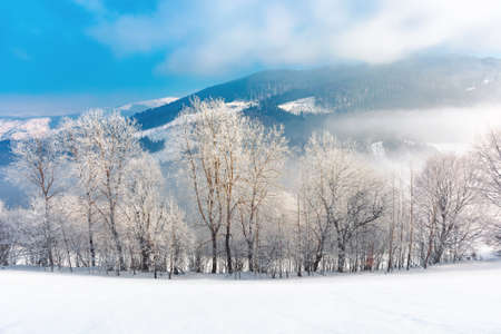 trees in hoarfrost on a snow covered hill. fairy tale winter mountain landscape. foggy weather on a sunny day Stock Photo