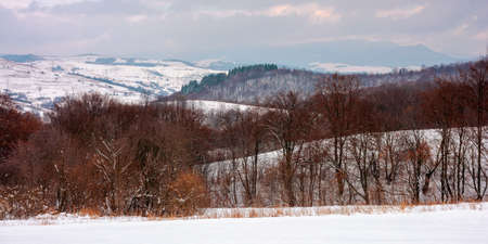 forest on a snow covered hill. beautiful countryside landscape of carpathian mountains. winter scenery in dappled light Stock Photo