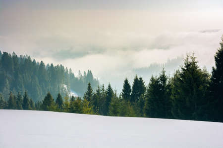 approaching blizzard in mountain landscape. spruce trees on snow covered meadow. bad weather condition in winter. fog and clouds in the distant valley Stock Photo