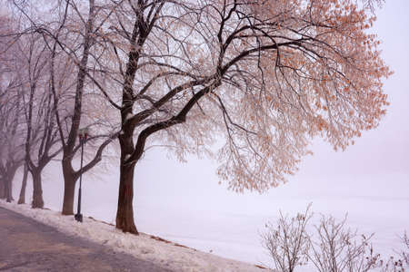 trees in mist on a frosty morning. wonderful urban scenery in wintertime. location linden alley on the embankment of river uzh Stock Photo