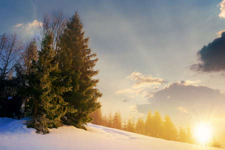fog on a sunny winter evening. spruce trees among the glowing mist. beautiful scenery in mountains at sunset. hills covered in snow. cold frosty weather Stock Photo