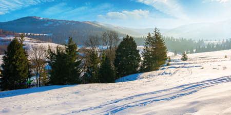 mountainous rural landscape in wintertime. wonderful frosty sunny day. trees on the snow covered hills.