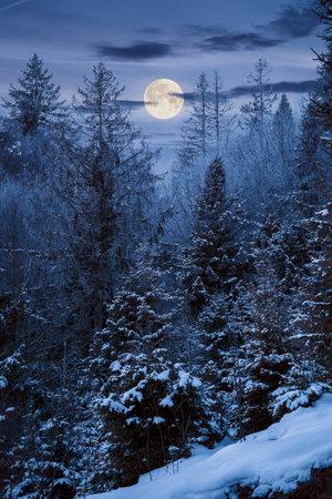 forest on a misty night. trees in hoarfrost. beautiful winter scenery in foggy weather in full moon light