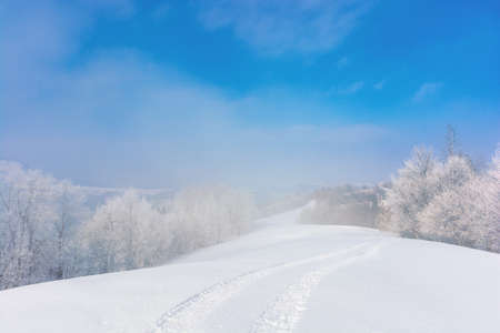 trees in mist on a snow covered hill. fairy tale winter mountain scenery. frosty weather on a sunny morning Stock Photo