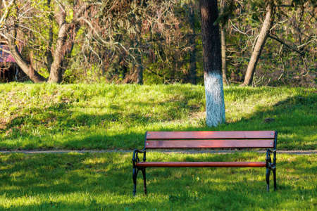 empty wooden bench in the park. sunny weather on spring or summer day. green grass on the lawn. relax concept