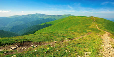 mountain landscape on a bright spring day. path through meadow in grass on the hill. wonderful weather with fluffy clouds on the sky. borzhava ridge of carpathians