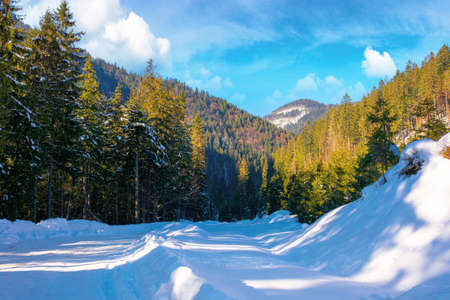 winter landscape in synevir national park. beautiful nature scenery with fir trees along the snow covered road. wonderful sunny weather with clouds on the sky Stock Photo