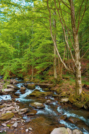 mountain river runs through the forest. water flow among the rocks. trees in fresh green foliage. beautiful nature scenery in spring Stock Photo